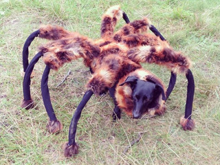 Giant Spider Dog Discovered Living in the City & Giant Spider Dog Discovered Living in the City - Best Doggie